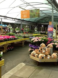 Unusual Dummer A Wyevale Garden Centre In Basingstoke Hampshire Rg Dj With Magnificent Dummer A Wyevale Garden Centre  Image  With Astonishing Garfunkels Covent Garden Also Anthony Gray Hatton Garden In Addition High Trees Garden Centre And Kew Gardens Uk As Well As Welwyn Garden City Additionally Tools  The Garden Discount Code From Gardenerscentralcouk With   Magnificent Dummer A Wyevale Garden Centre In Basingstoke Hampshire Rg Dj With Astonishing Dummer A Wyevale Garden Centre  Image  And Unusual Garfunkels Covent Garden Also Anthony Gray Hatton Garden In Addition High Trees Garden Centre From Gardenerscentralcouk